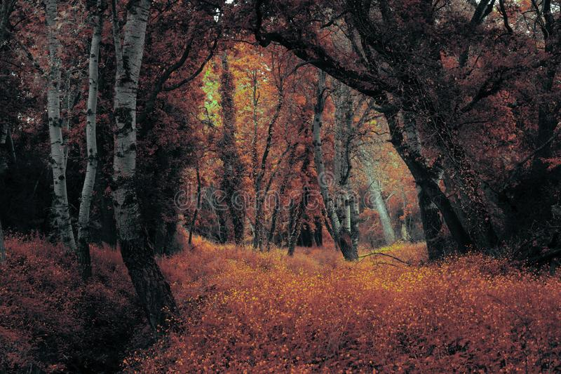 Magical mystical forest. Fairy tale trails of the woods royalty free stock image