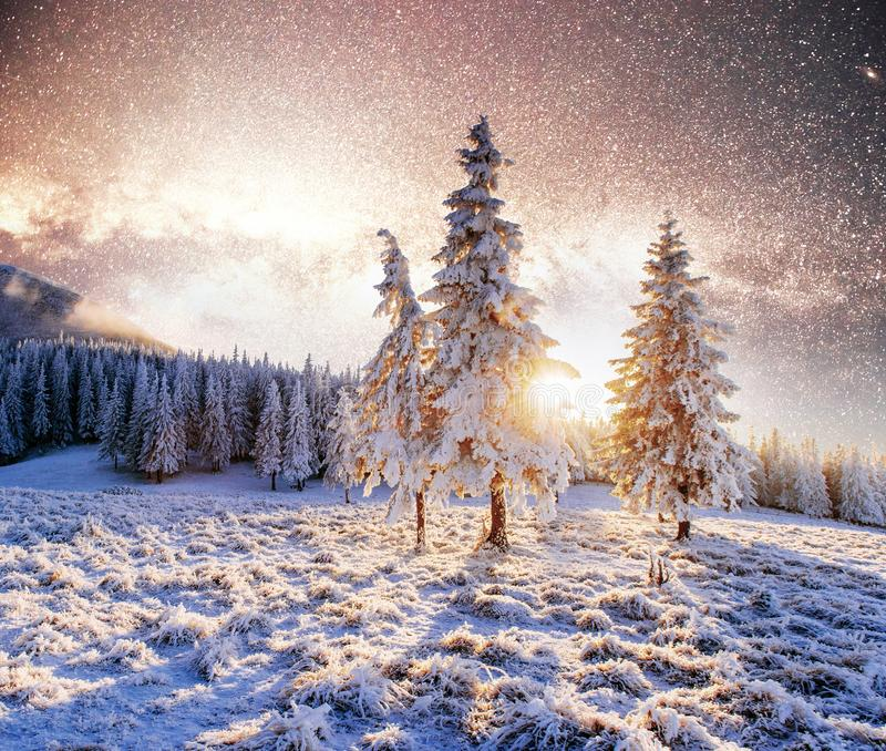 Magical moment, snow covered trees. Winter landscape. Vibrant night sky with stars and nebula and galaxy stock images