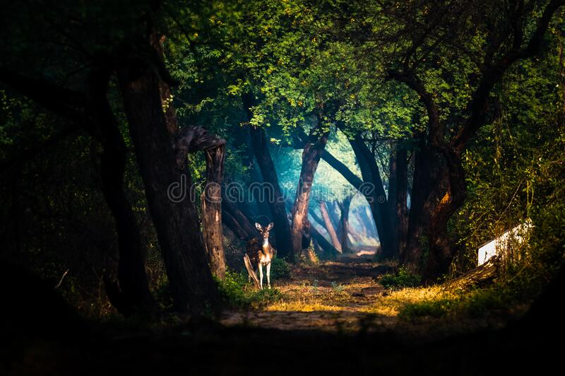 Magical Moments at Bharatpur stock images