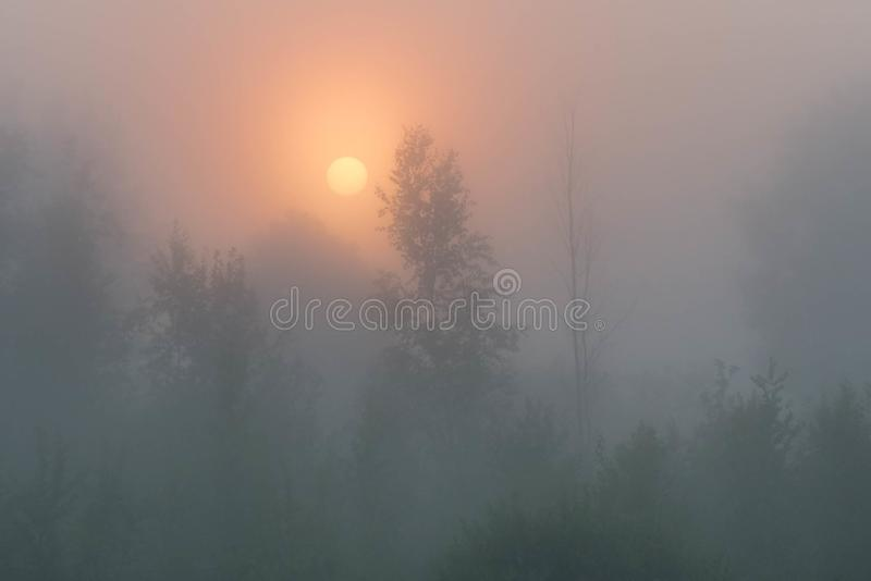 Magical morning sun through fog on beautiful countryside scenery. Mystical morning landscape in thick mist. Mystical morning landscape in mist. Rising sun royalty free stock photos