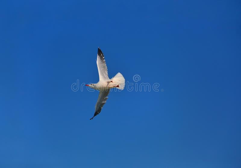 Magical open sky view with single flying bird. stock images