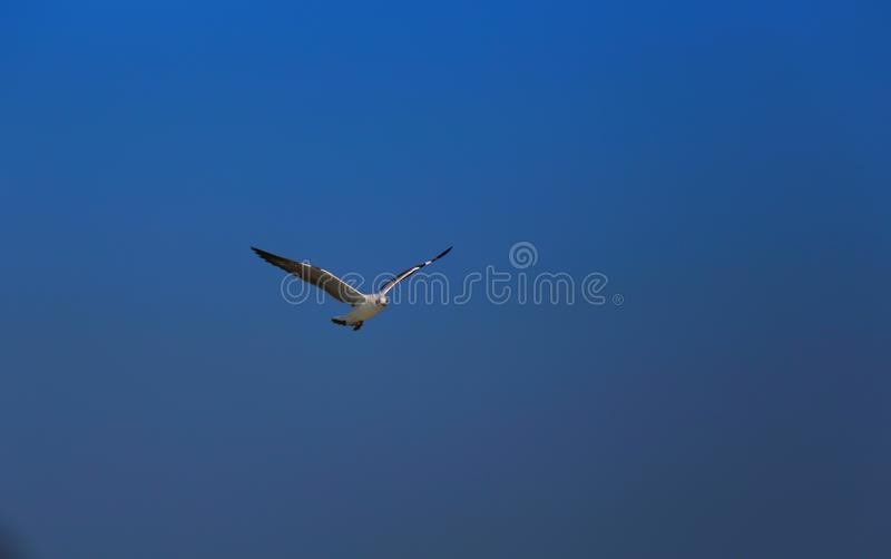 Magical open sky view with single flying bird. stock photography