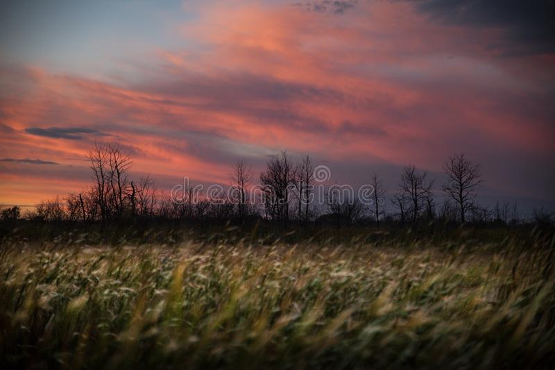 Magical prairie Sunset royalty free stock photo