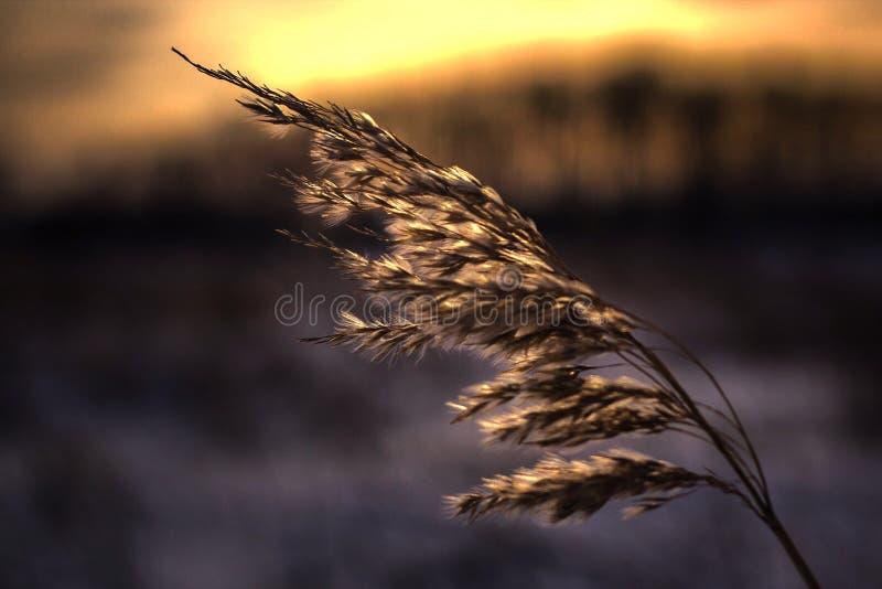Magical prairie Sunset royalty free stock photos