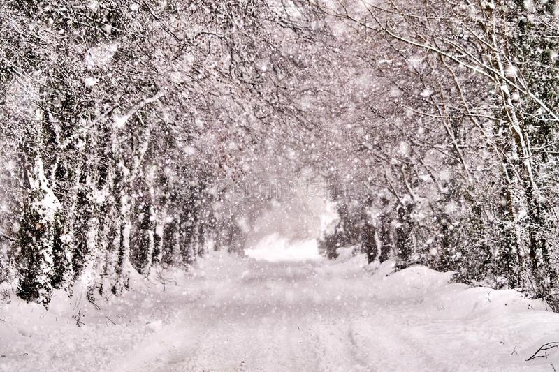Magical snow winter road. Magical looking winter road covered in snow in Bannow County Wexford Ireland in March 2018 royalty free stock photography