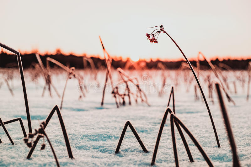 Magical sunrise on the snow covered lake. With frozen bushes stock photo