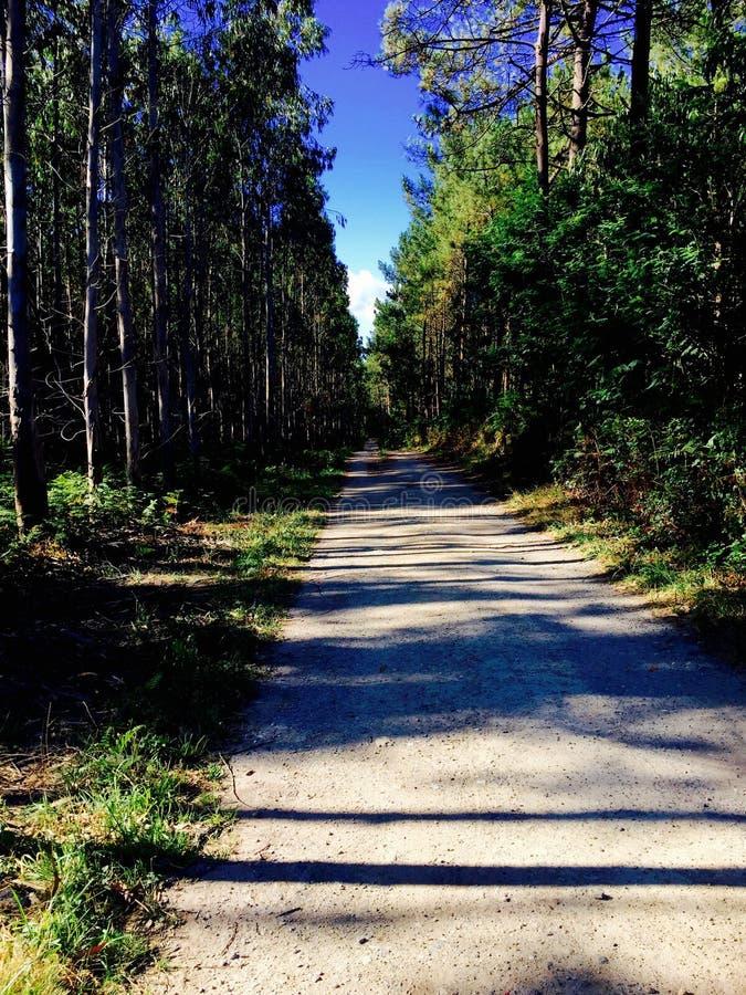 Magical trail in the middle of a forest. Mágico camino en medio de un bosque. royalty free stock photo