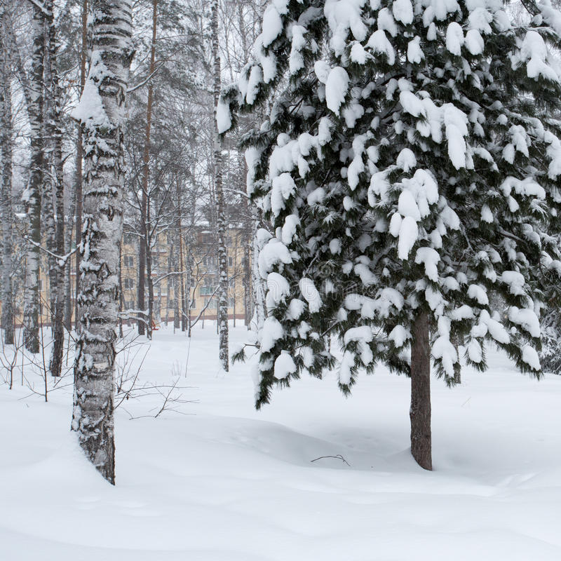 Magical winter forest stock image