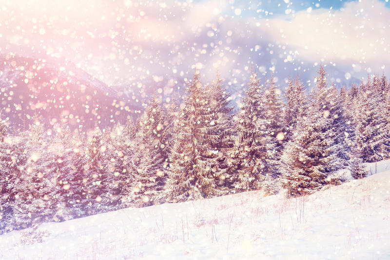 Magical winter landscape, background with some soft highlights a. Nd snow flakes. Dramatic wintry scene. Carpathian, Ukraine, Europe stock photo