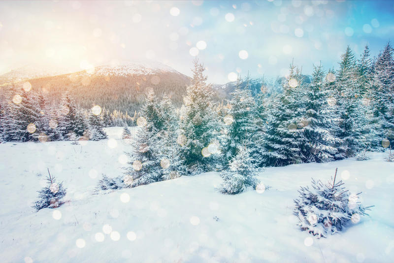 Magical winter landscape, background with some soft highlights a. Nd snow flakes. Dramatic wintry scene. Carpathian, Ukraine, Europe royalty free stock images