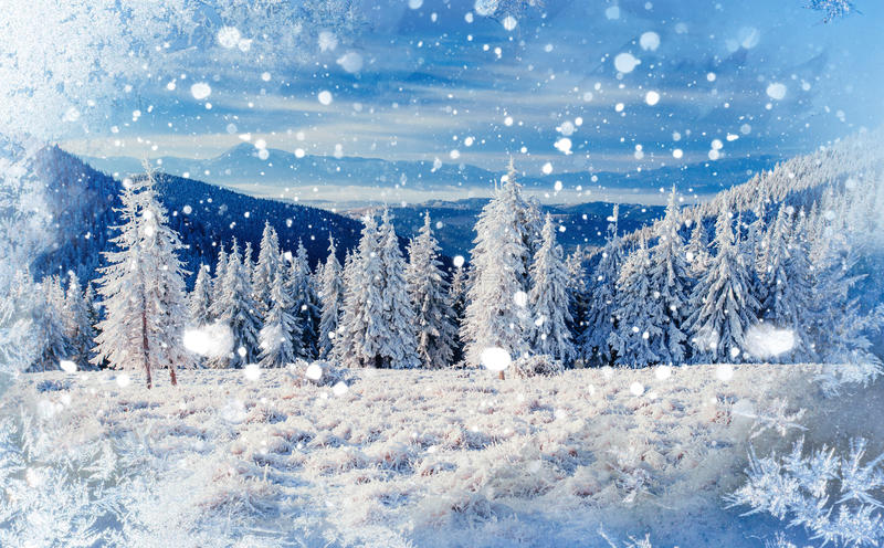 Magical winter snow covered tree, background with some soft high. Lights and snow flakes royalty free stock images