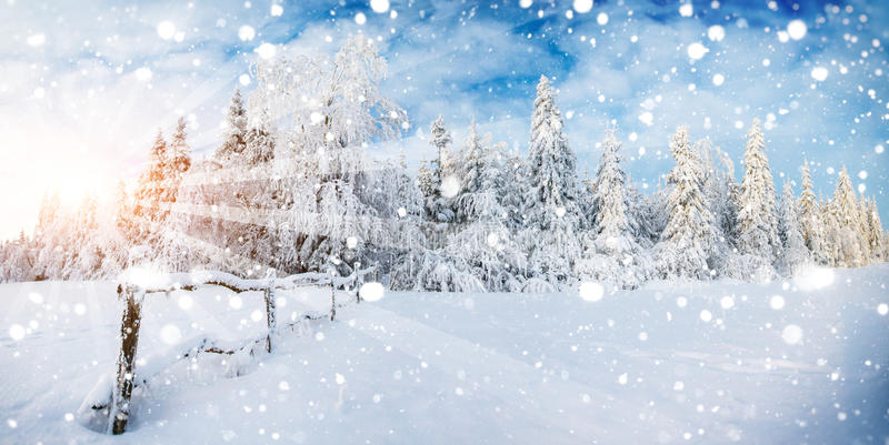 Magical winter snow covered tree, background with some soft high. Lights and snow flakes royalty free stock photography