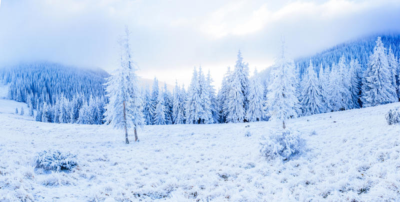 Magical winter snow covered tree. The beauty of the world. Carpathians. Ukraine. Europe. stock image