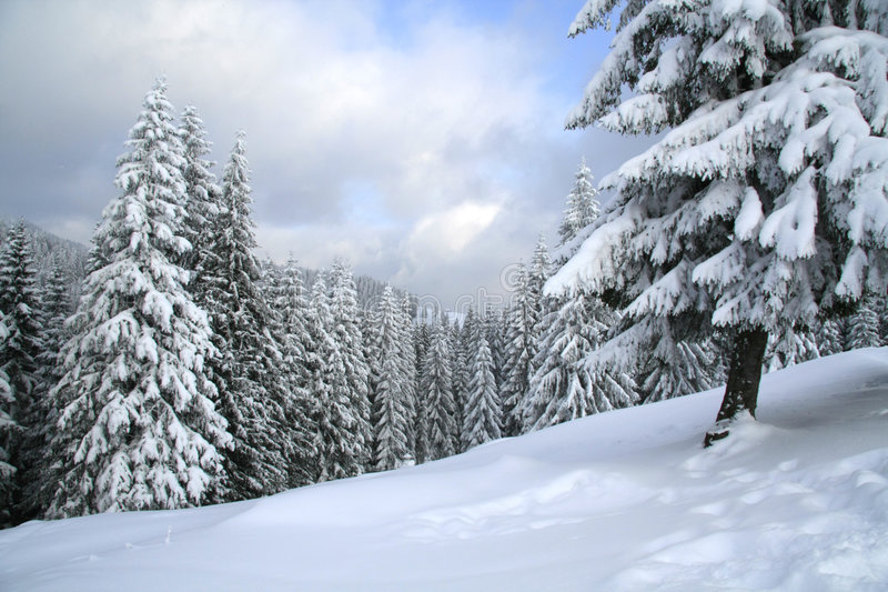 Magical winter woods covered with fresh snow stock photo