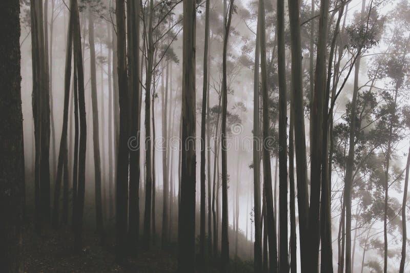 Magican Forest Trees met Verbazende Witte Mist in Regenachtig Autumn Day royalty-vrije stock foto's