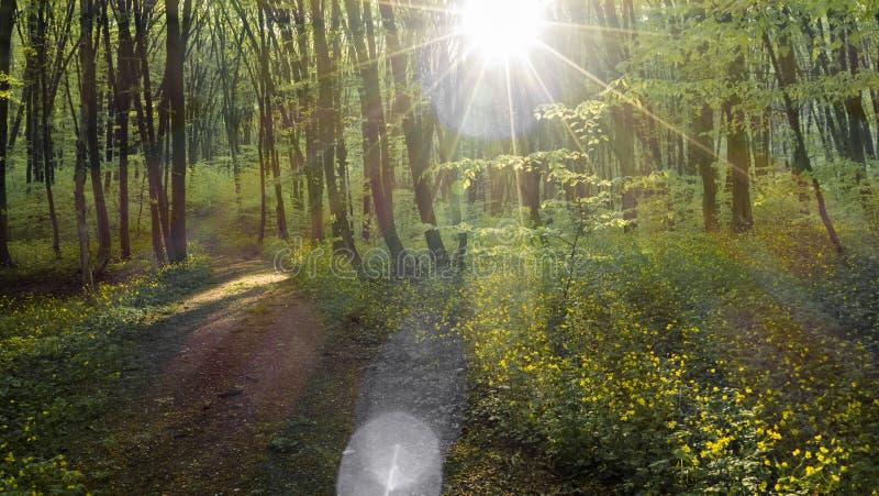 Magiczna ścieżka zdjęcie royalty free