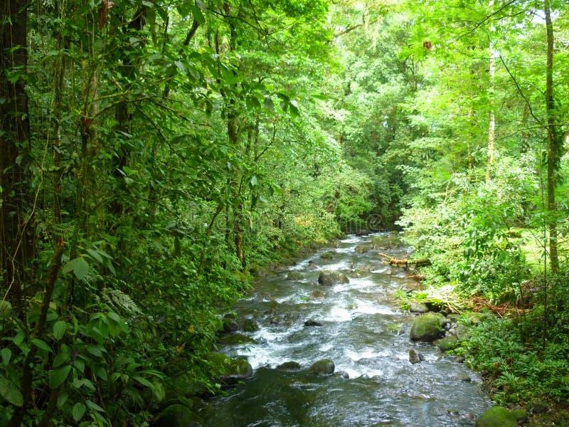 Magiczna rzeka w Guapiles, Limà ³ n, Costa Rica zdjęcie stock
