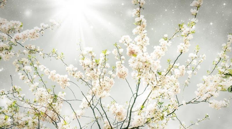 magiczna wiosna zdjęcia royalty free