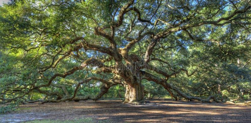 Magicznego Anioła Dębowy drzewo, Charleston SC obraz stock