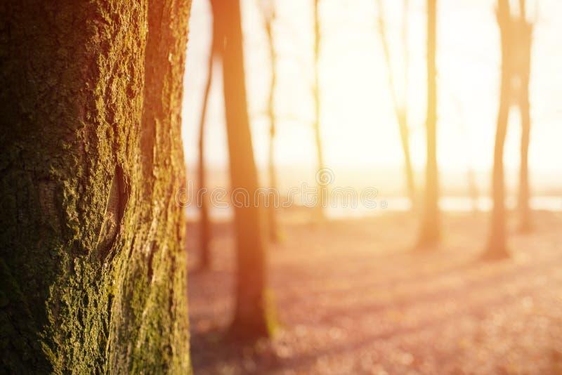 Magicznej jesieni lasowy tło z światłem słonecznym, copyspace zdjęcia stock