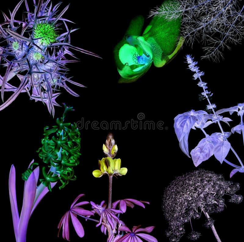 Magiczni świecący kwiaty obraz stock