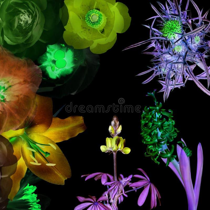 Magiczni świecący kwiaty obrazy royalty free