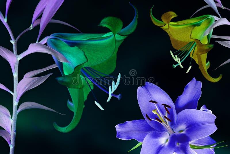 Magiczni świecący kwiaty fotografia stock
