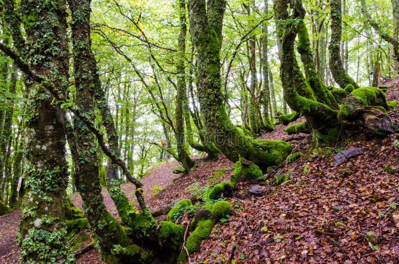 Magiczni lasy obrazy stock