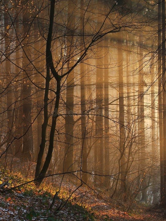 magiczni sunbeams obraz royalty free