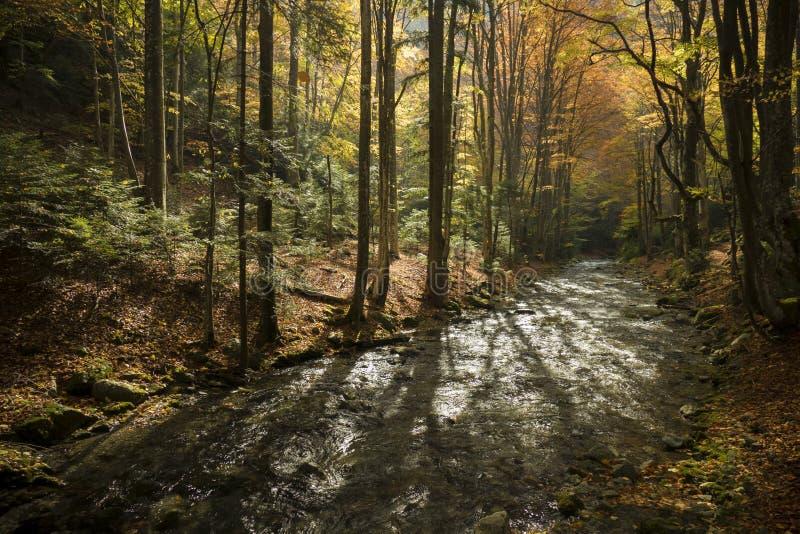 magiczny jesień las obraz royalty free