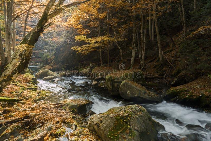 magiczny jesień las obrazy royalty free