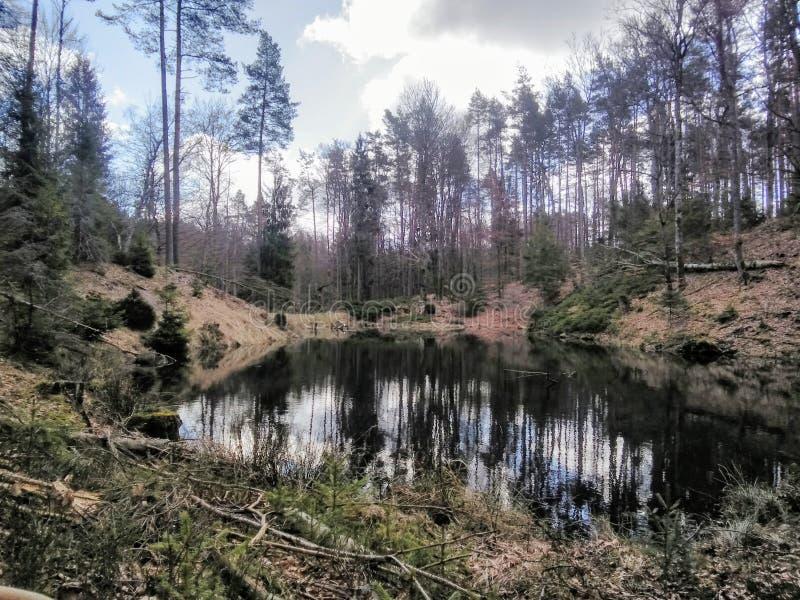 Magiczny jezioro w lesie obrazy royalty free