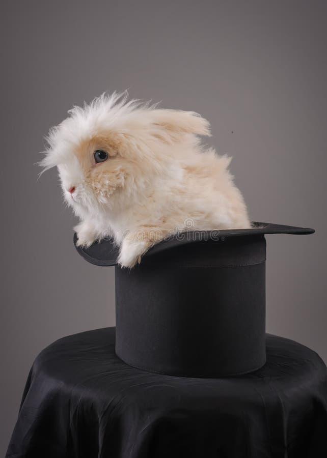 Magiczny kapelusz z pięknym białym królikiem obrazy stock