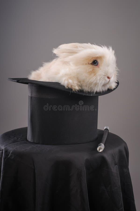 Magiczny kapelusz z pięknym białym królikiem obraz stock
