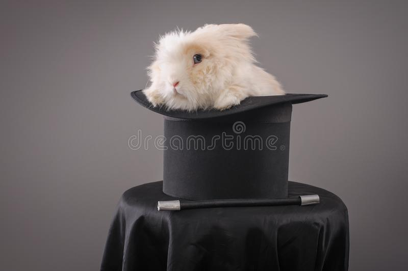 Magiczny kapelusz z pięknym białym królikiem zdjęcia royalty free