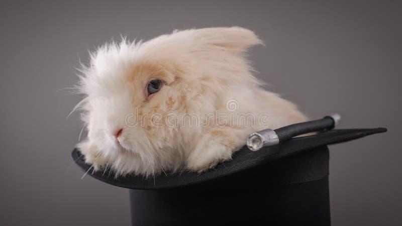Magiczny kapelusz z pięknym białym królikiem obraz royalty free