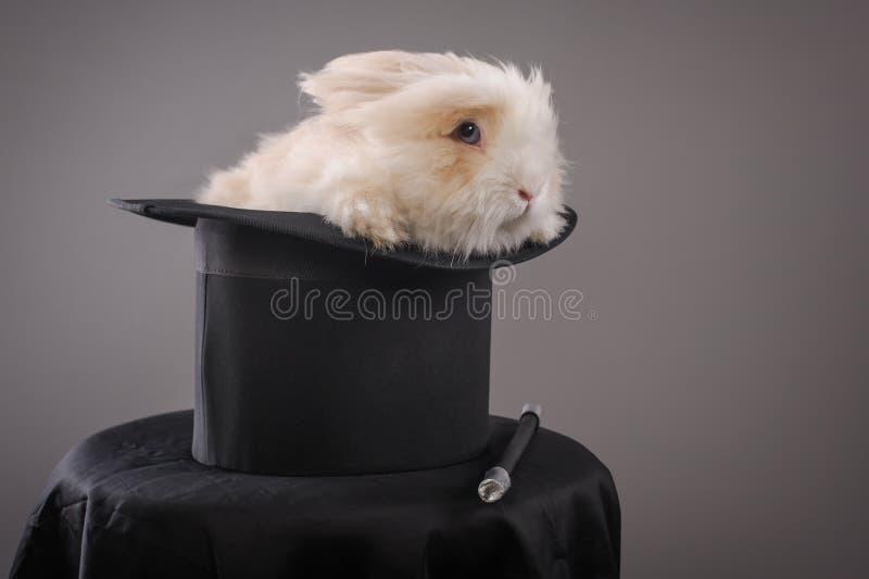 Magiczny kapelusz z pięknym białym królikiem zdjęcie royalty free