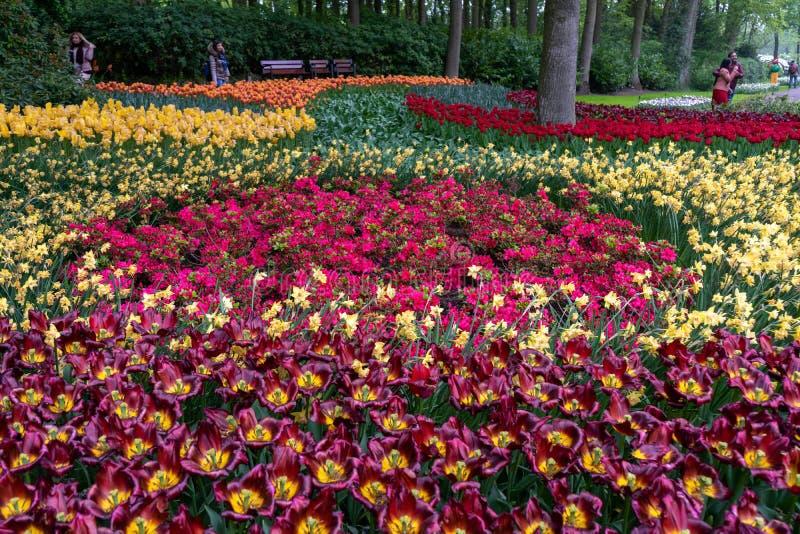 Magiczny krajobraz kolorowi tulipany, daffodils i azalie w flowerbed w parku w Holandia, kwiat ?wiat?a playnig t?o obrazy stock
