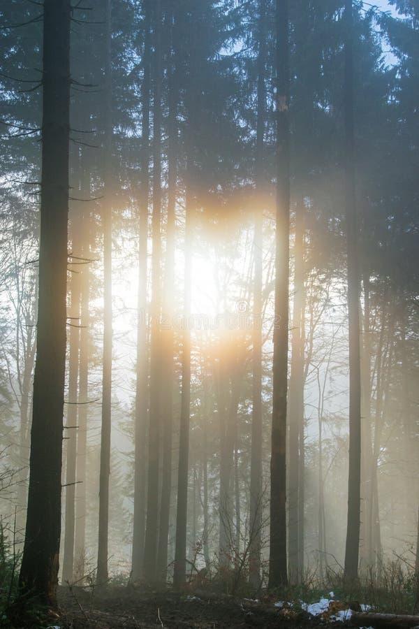 magiczny las obrazy royalty free