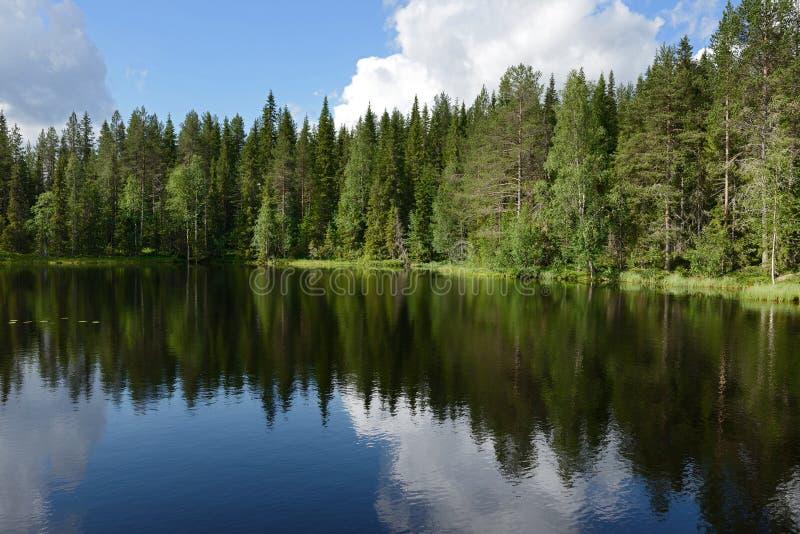 Magiczny las blisko jeziora fotografia royalty free