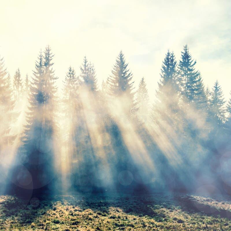 Magiczny las w myst z słońce promieniem zdjęcia royalty free
