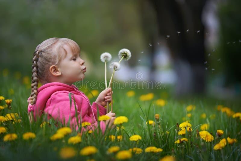 Magiczny niewidziany dandelion cios obrazy stock