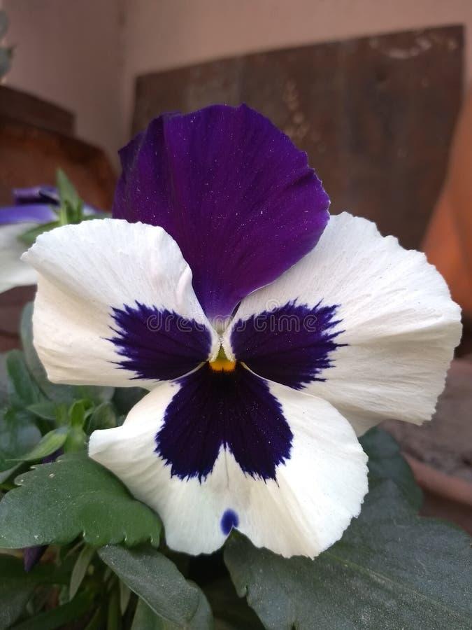 Magiczny purpura kwiat fotografia stock