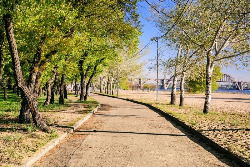 Magiczny ranek z powstającym słońcem tworzy sztukę światło w alei miasta parku Ja obraz royalty free