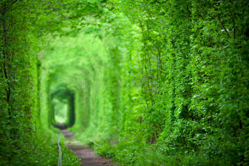 Magiczny tunel miłość, zieleni drzewa i linii kolejowej tło, obraz stock