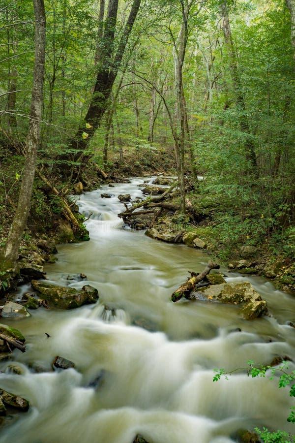 Magiczny Virew przy huczenie bieg lasem i zatoczką zdjęcie royalty free