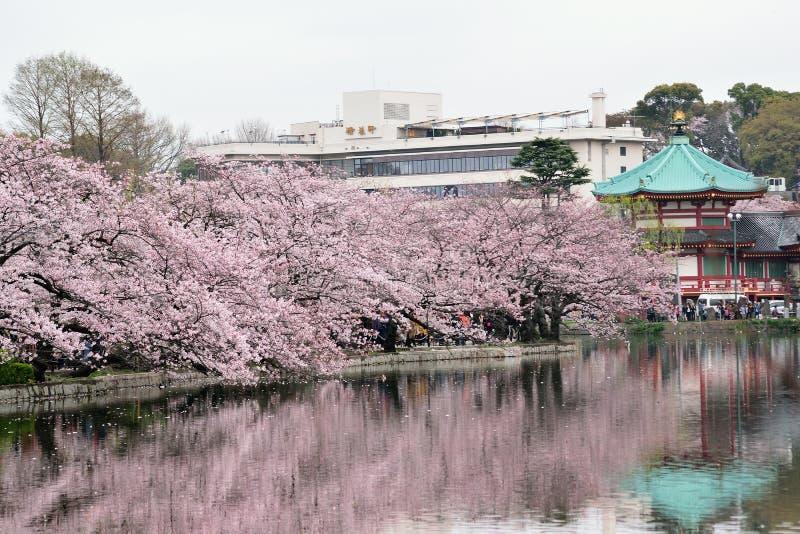 Magiczny wiosna krajobraz w Tokio, Japonia zdjęcia royalty free