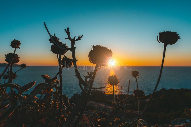 Magiczny złoty zmierzch nad dennym horyzontem Suszy rośliny w forground obrazy royalty free