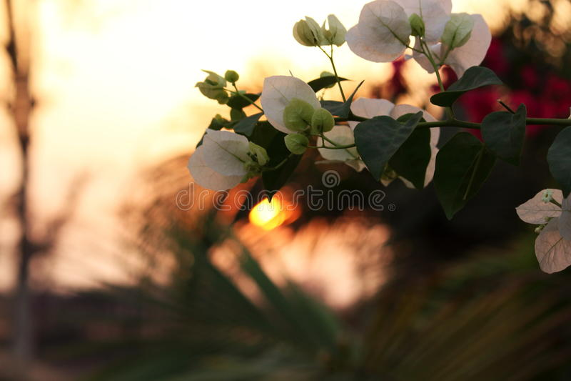 Magie blanche photo stock