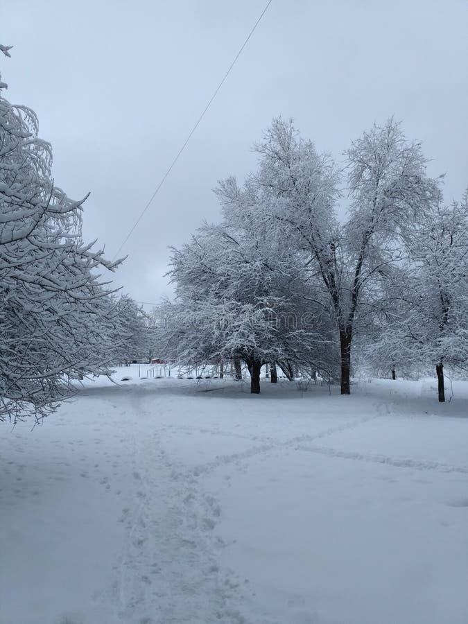 Magie de l'hiver images libres de droits